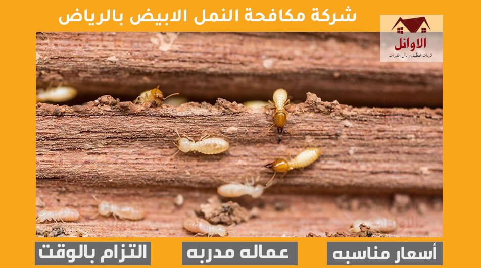 شركة مكافحة النمل الأبيض بالرياض